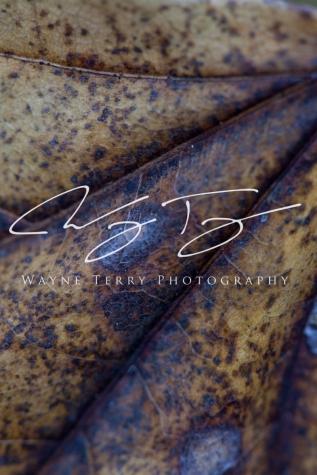 webwater-127